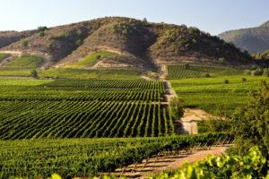 Weinbau in Argentinien