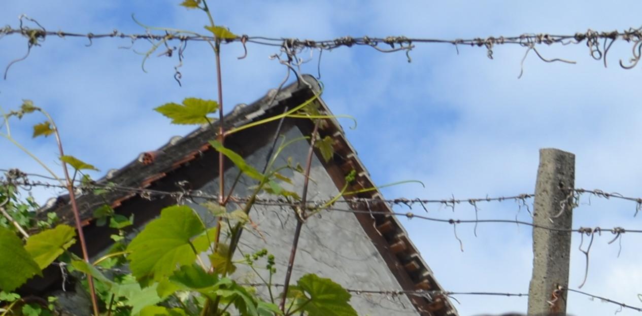 Weinländer und deren Weinanbaugebiete